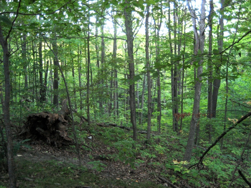 Bruce Trail Trees