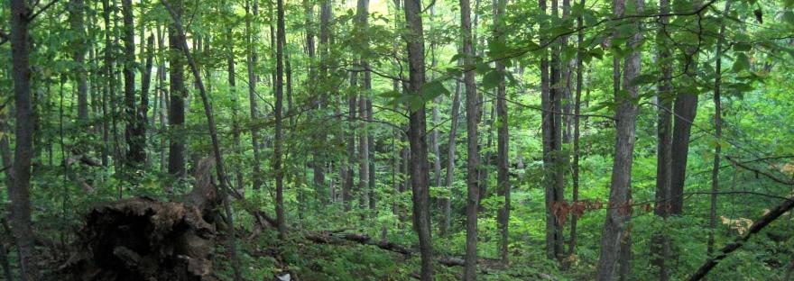 Bruce Trail Trees