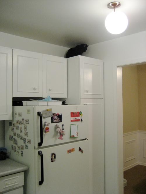 Odis on cupboard