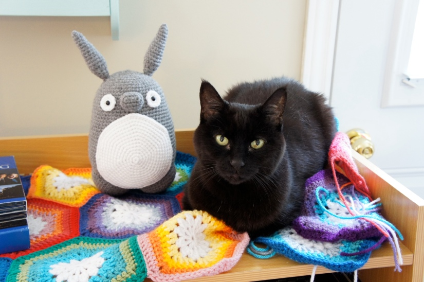 Odis and Totoro