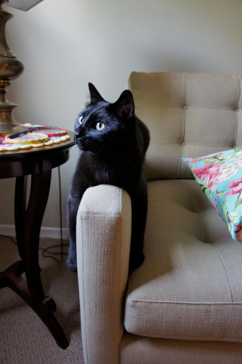 Monorail-cat Boo