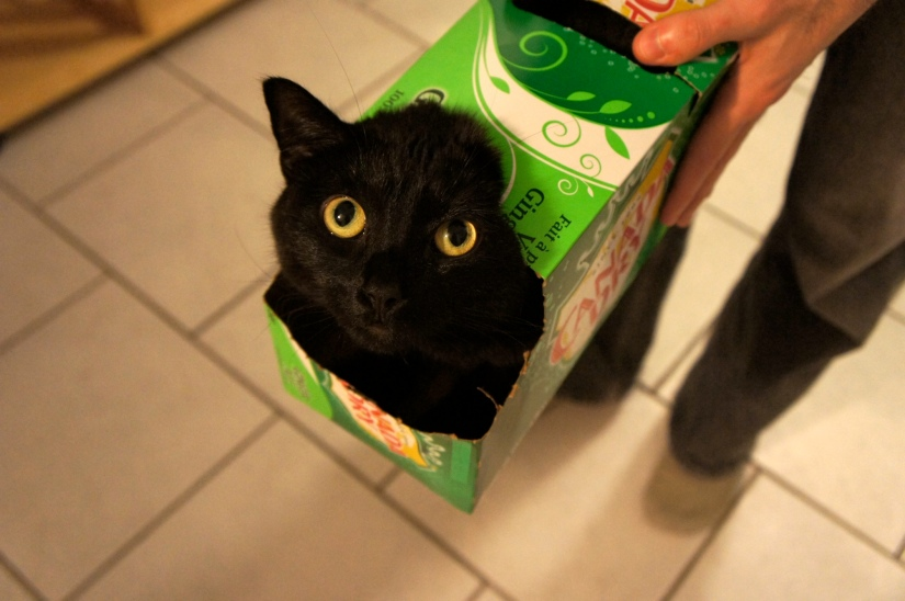 Boo in ginger ale box