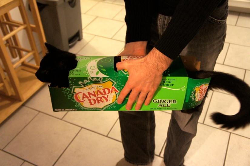 Boo in ginger ale box 2