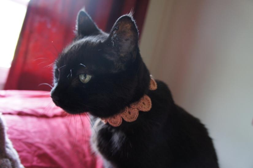 Collar for Odis 2