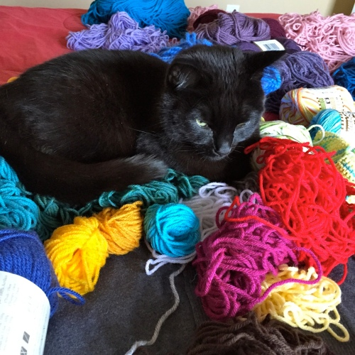 Boo with yarn stash